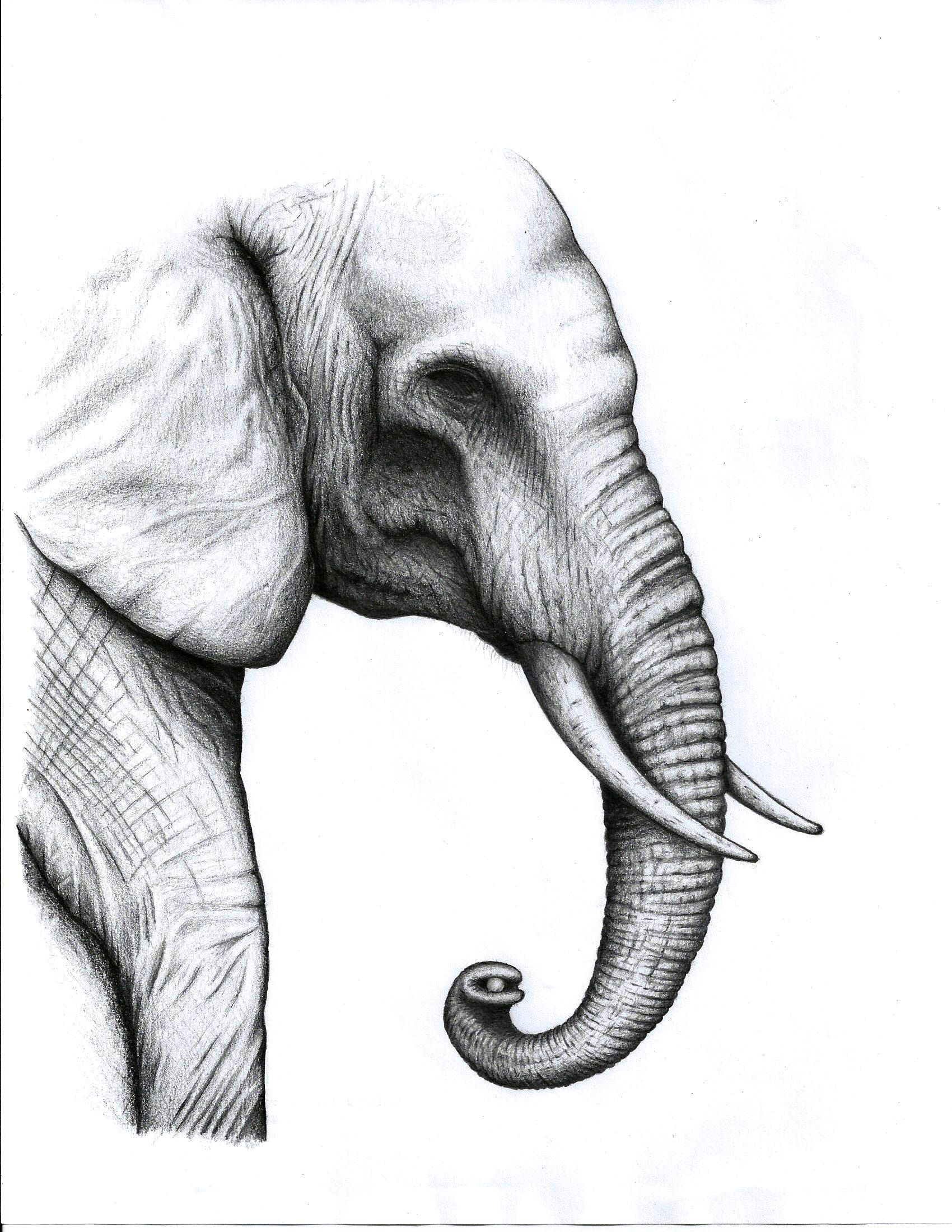 Elephant pencil drawing ariktrejos