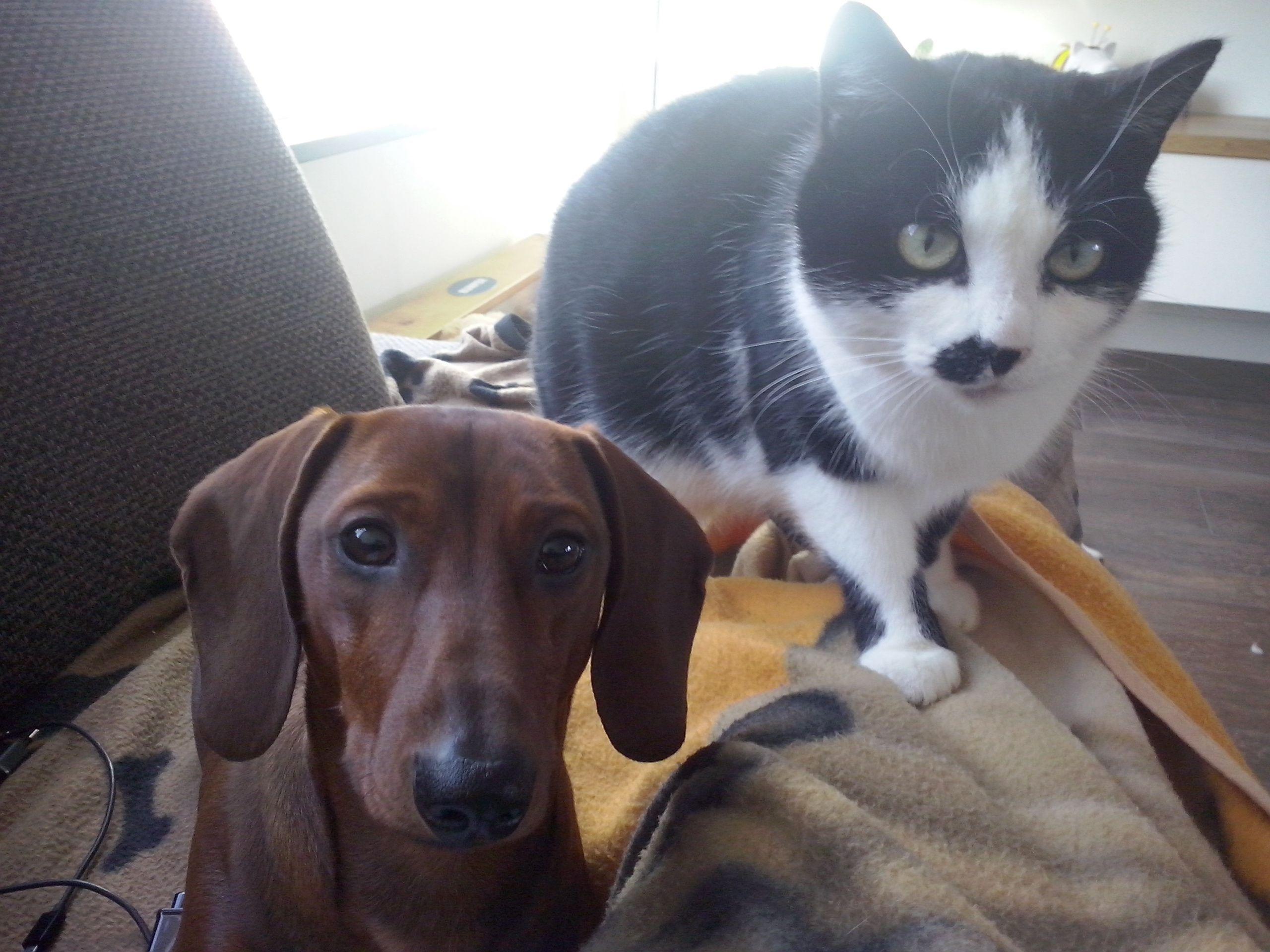 Samen met de kat