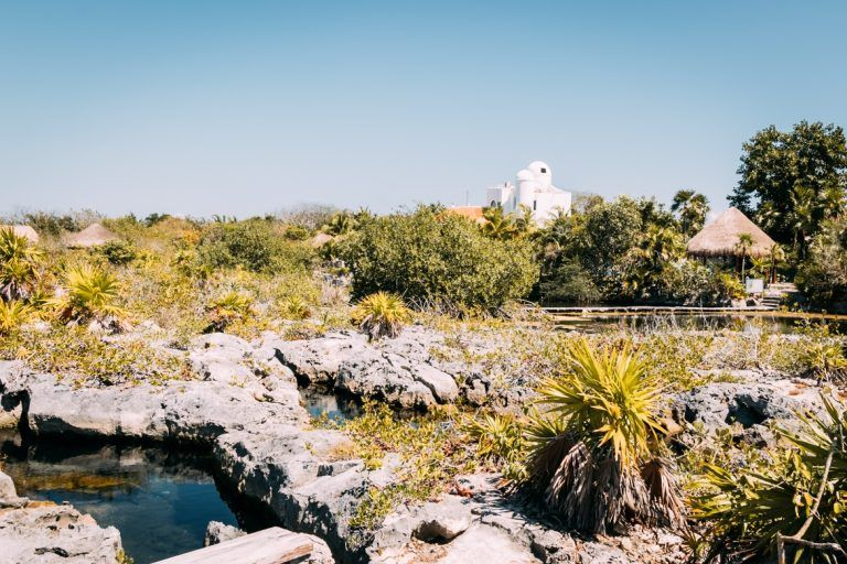 Die Schonsten Cenoten In Yucatan Mexikos Versteckte Oasen Mexiko Urlaub Yucatan Mexiko