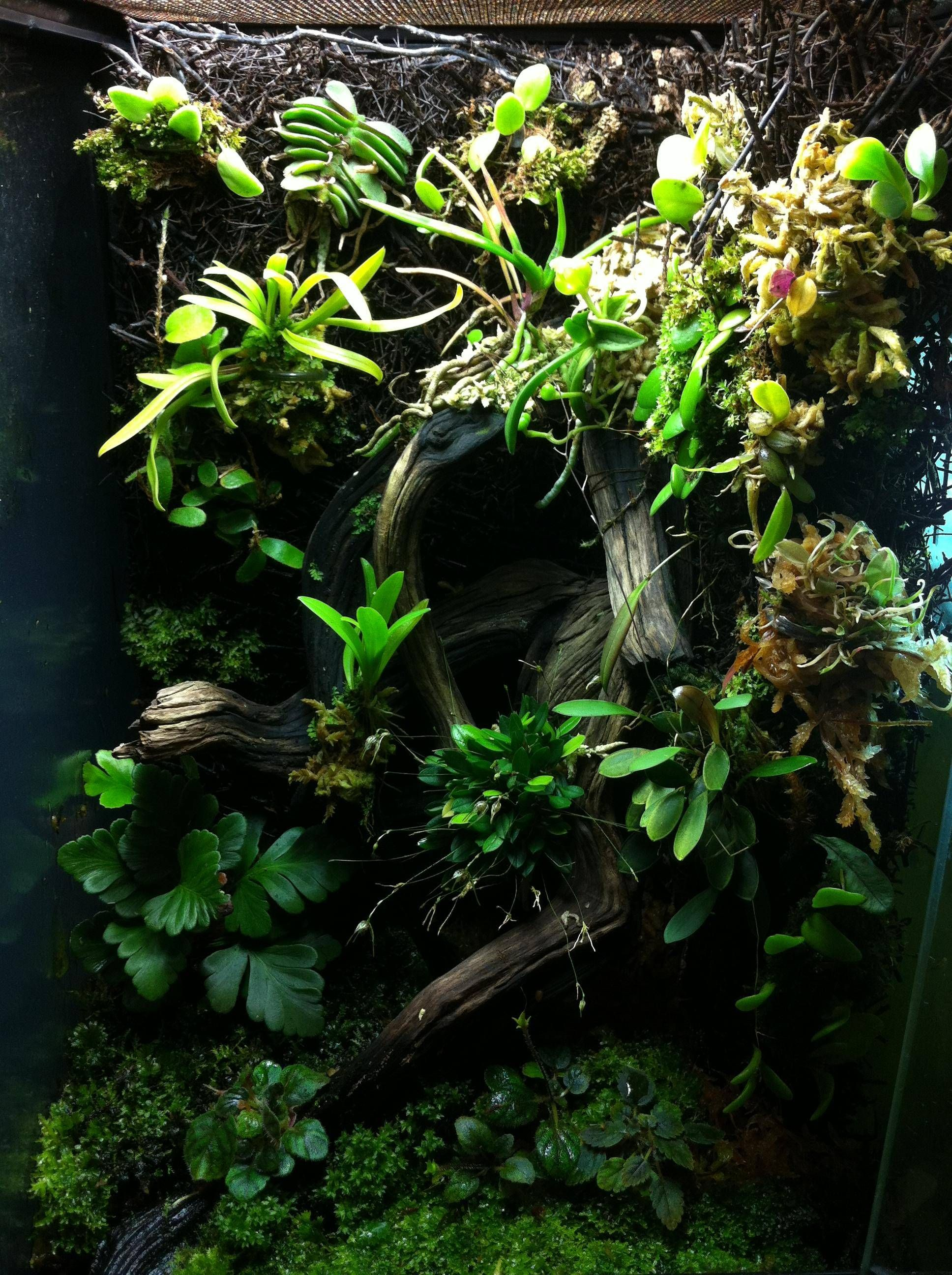 Click the image to open in full size. Orchid terrarium
