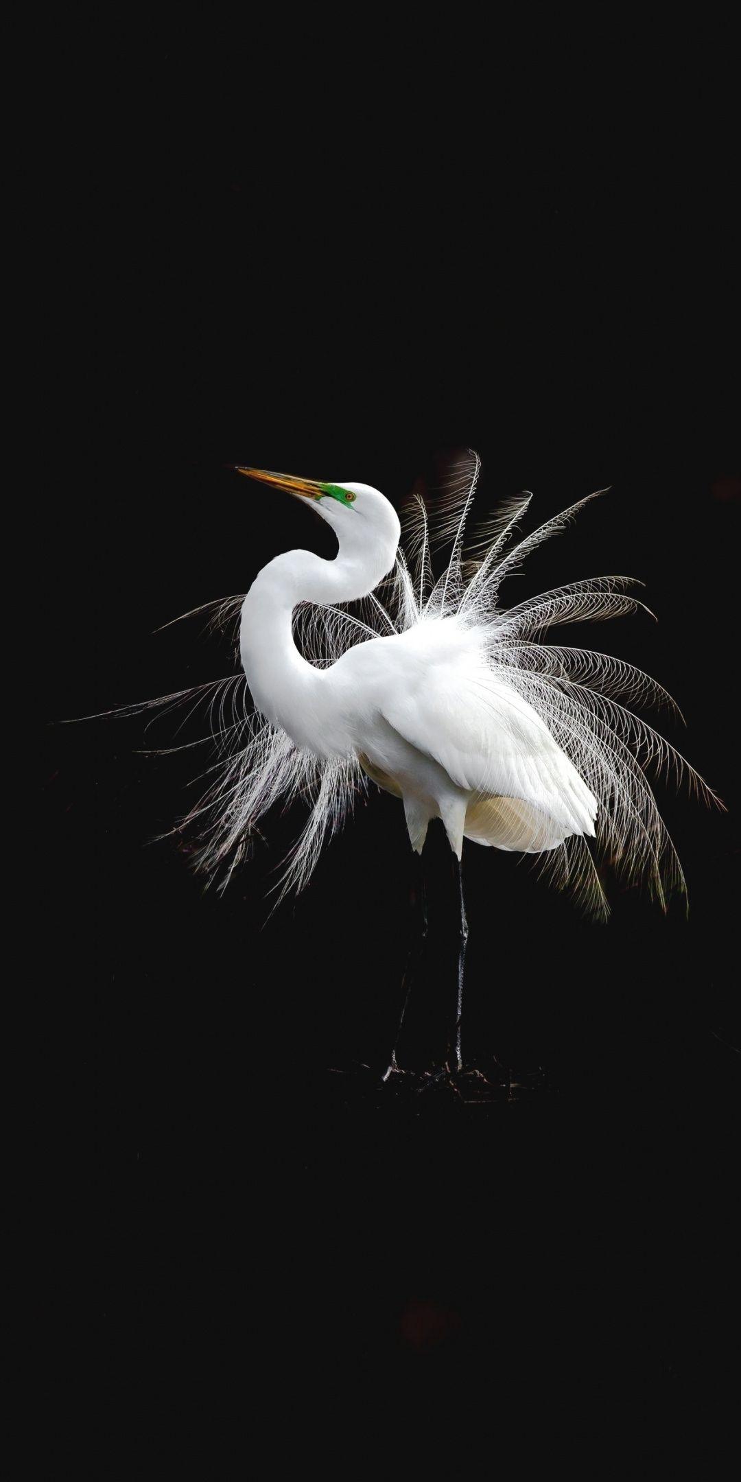 White Bird Egret Portrait 1080x2160 Wallpaper