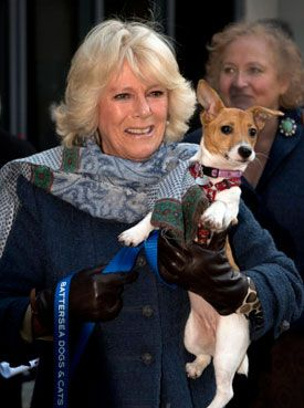 The Duchess Of Cornwall Visits Battersea Dogs Cats Home Battersea Dogs Jack Russell Dogs Dog Cat