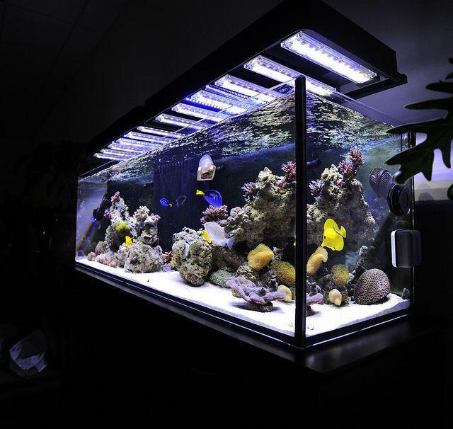 Panorama led aquarium light fixture over reef aquarium for Above water fish tank