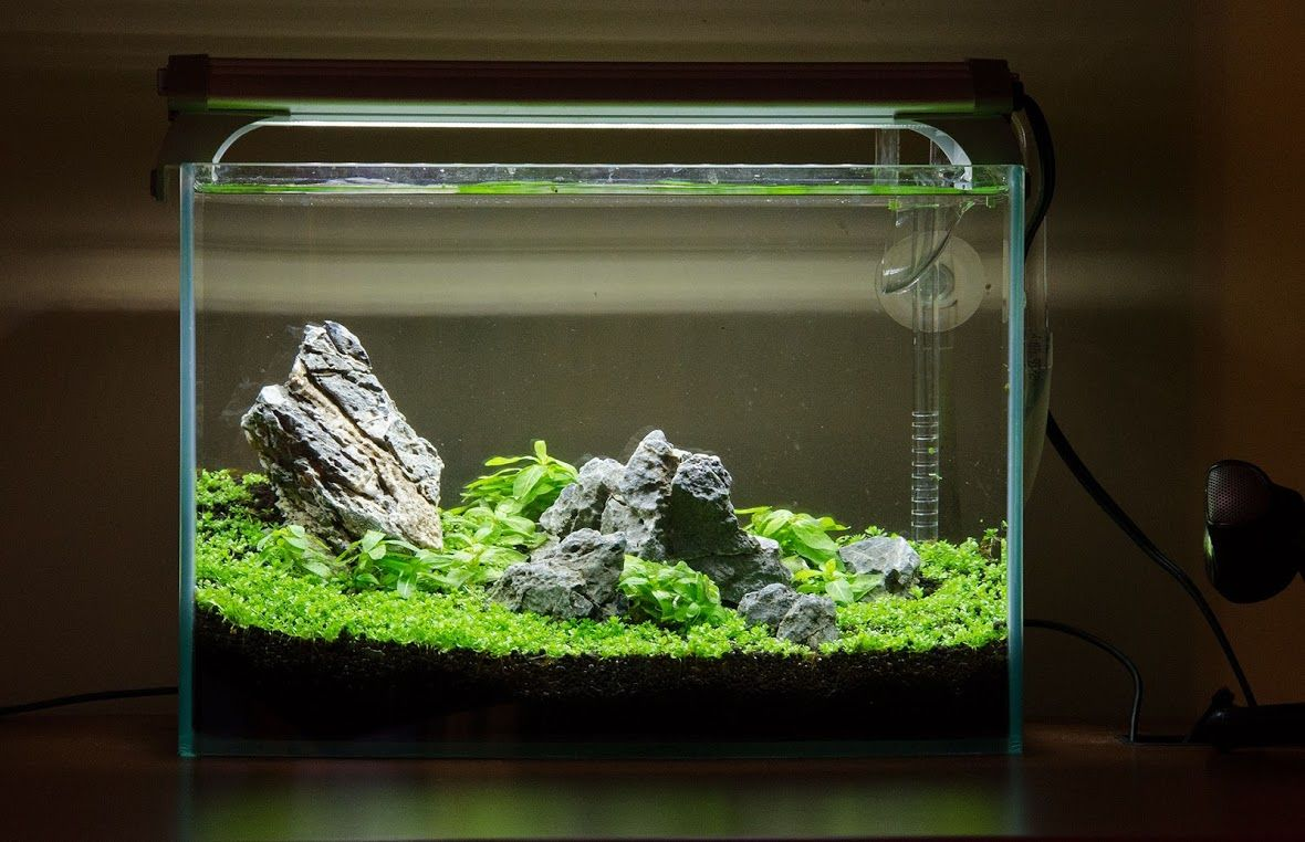 2 5 G Rimless Live A Beautiful Life Tank Design