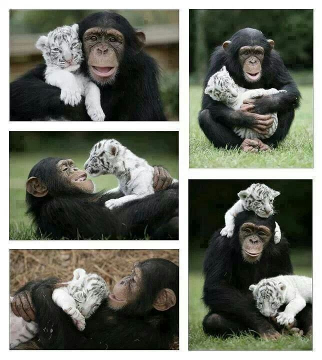Love is amazing