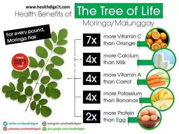 malunggay tea benefits
