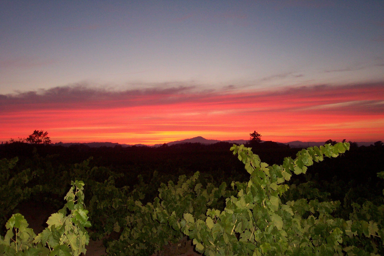 Inspiration Vineyards Russian River Sonoma County Chardonnay Wine Sonoma County Wine Sonoma County California Sonoma Wine Country