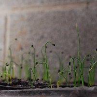 Pin En Plantas