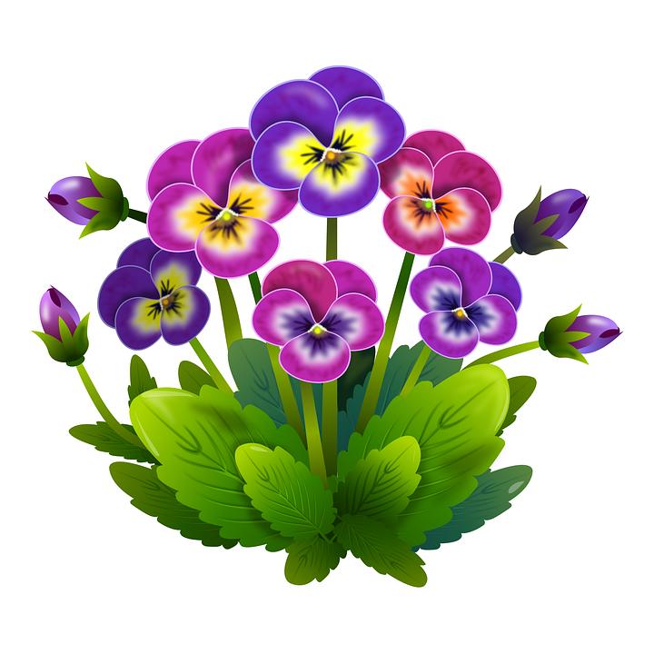 Gratis Billede Pa Pixabay Stedmoderblomster Blomster Fjeder Blomstertegning Blomster Kunst Blomster Maleri