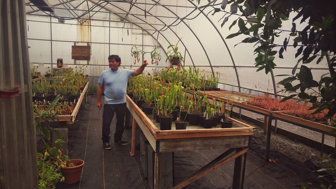 Those days when you stumble into the largest carnivorous plant nursery in Canada #score #carnivorousplants #popspreditoryplants #retirementgoals #goodbyefruitflies #langleybc by jjammerr