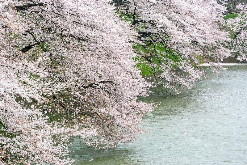 Tokyo Spring 2