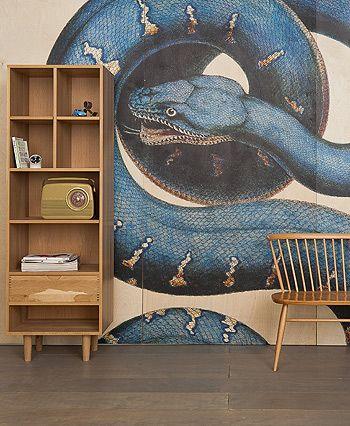 Albertus Seba as a wall panel Interior walls, Wall