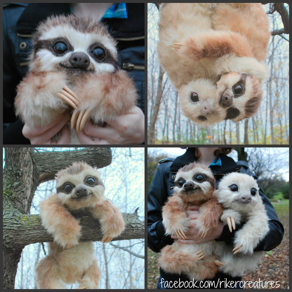 Worksheet 3 Toed Sloth For Sale 17 best images about sloth on pinterest coming soon spirit animal and sewing patterns