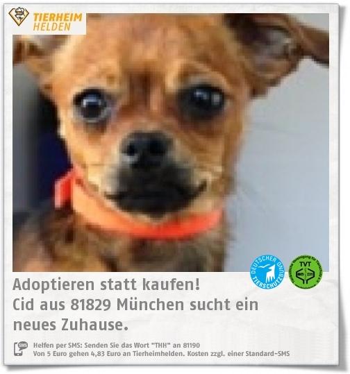 Pin Von Tierheimhelden On Pinterest Auf Tiere Aus Dem Tierheim