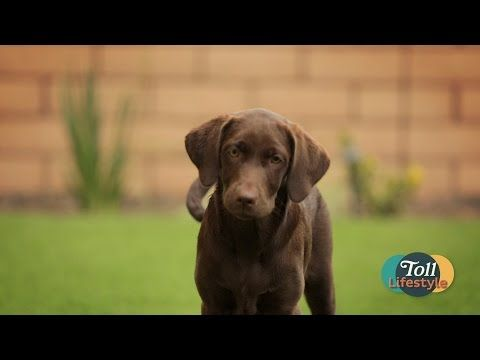 "If you don't have a pet yet this ""New Puppy"" segment will definitely have you thinking about getting one for your new Toll Brothers home.    http://www.tolllifestyletv.com/?cmpid=SPi20534&utm_medium=social"