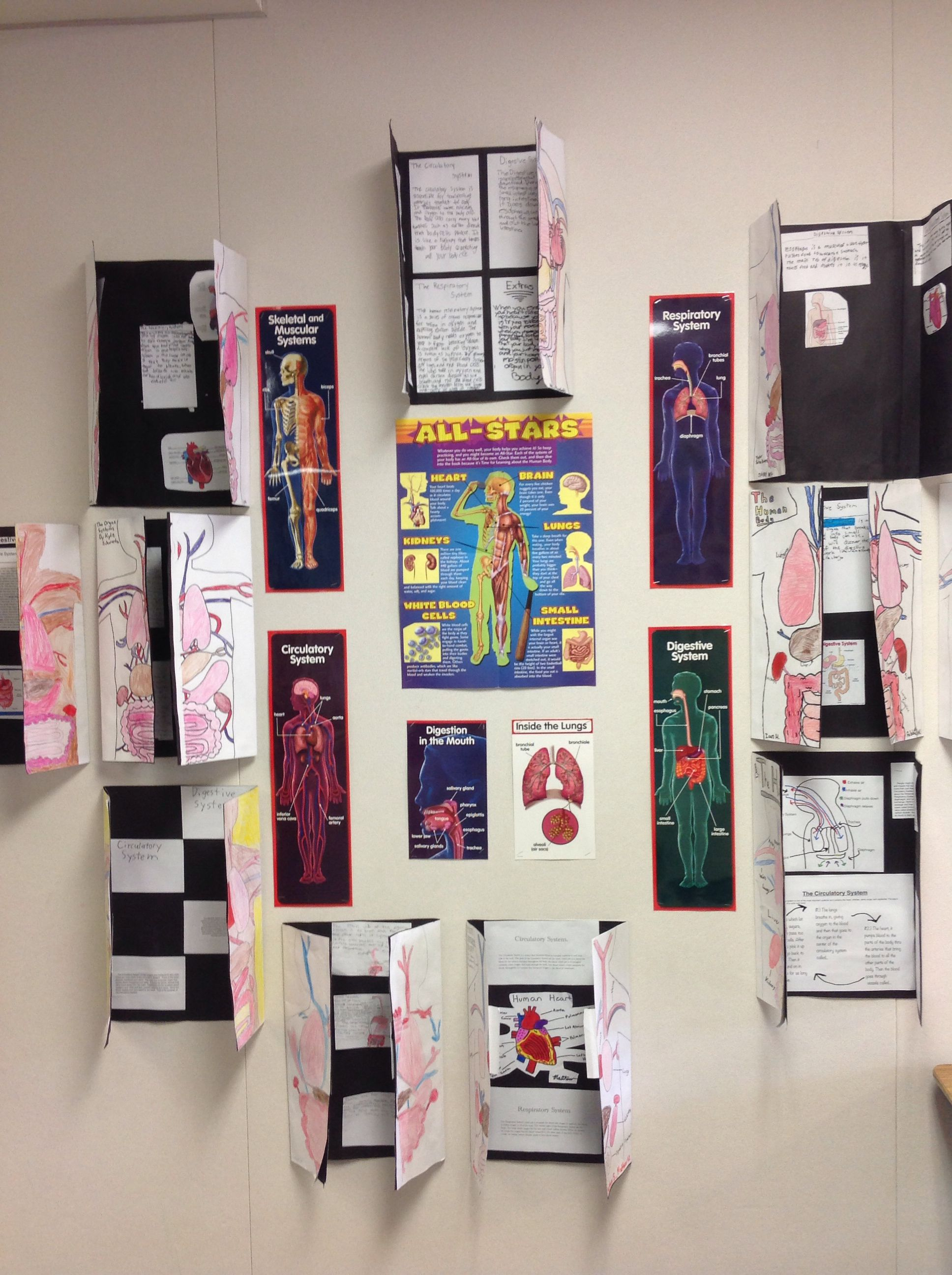 Human Body Foldable For Fifth Grade Science Class