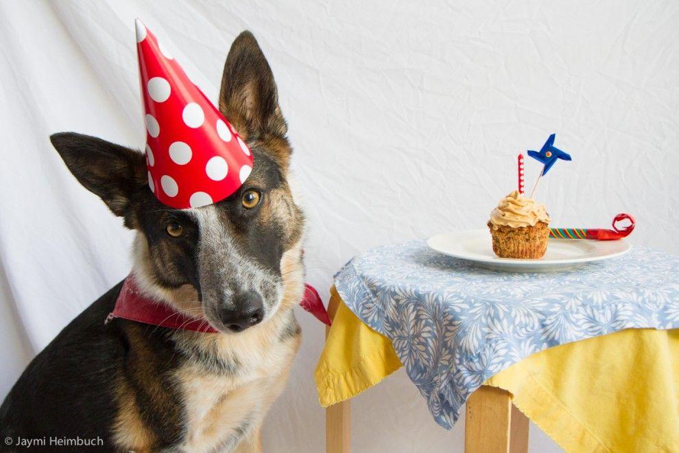 Винтажных открыток, открытка с днем рождения собака задувает свечи
