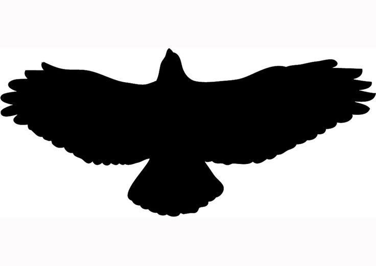 pin by ange pond on silhouettes pinterest silhouette canvas and rh pinterest com hawk clipart free hawk clip art shirt