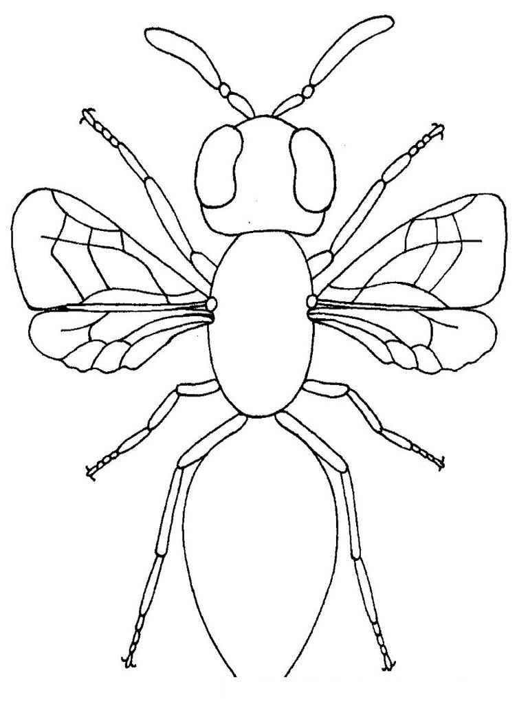 Free Printable Bug Coloring Pages For Kids Insect Coloring Pages Bug Coloring Pages Animal Coloring Pages [ 1024 x 768 Pixel ]