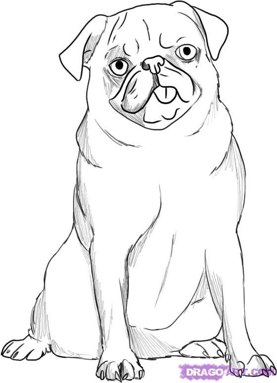 How To Draw A Pug By Dawn Animal Drawings Pug Art Outline Drawings