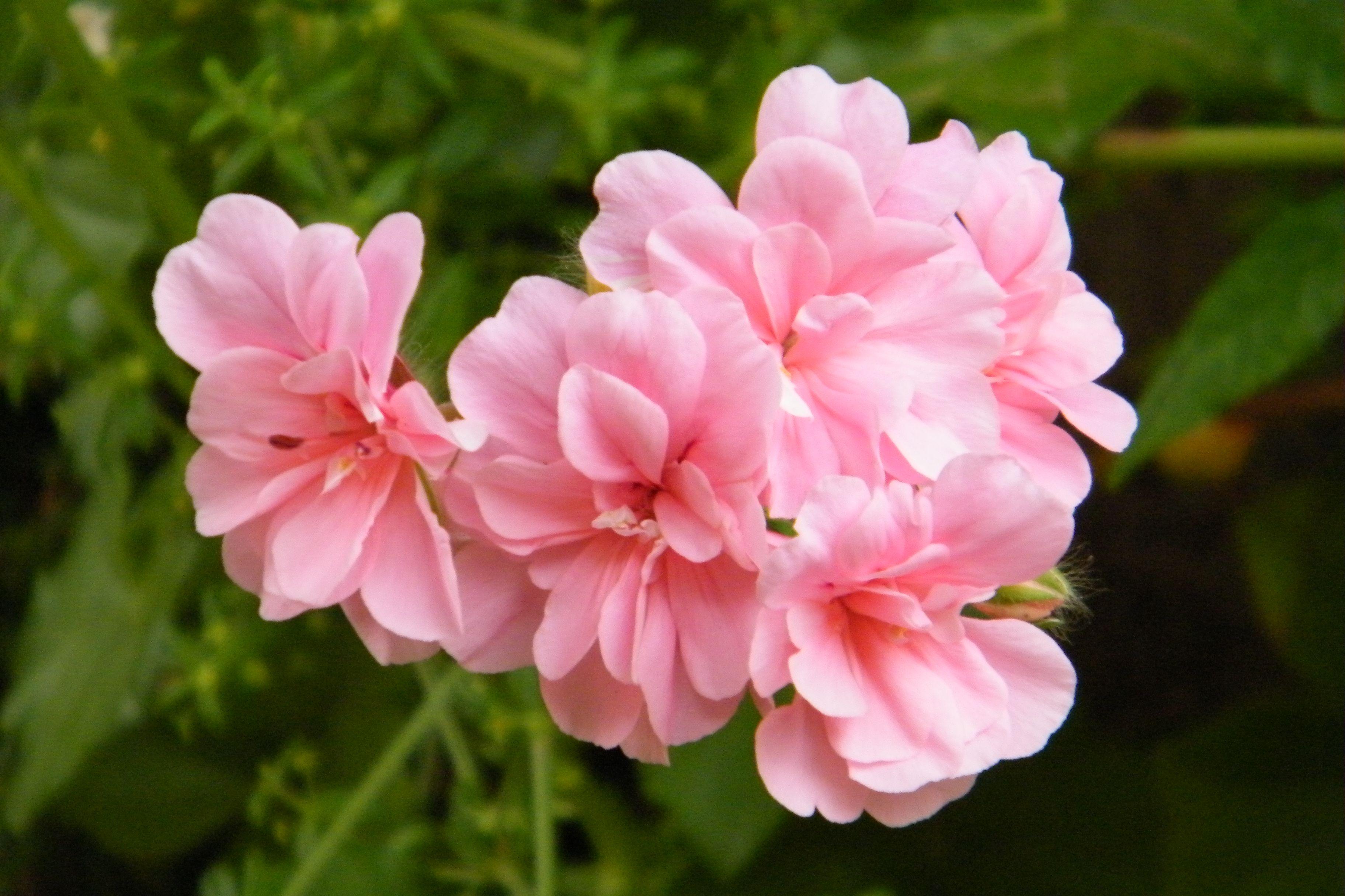 Flor en rosa leve