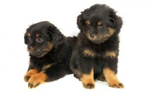 Dog Breed Selector Puppy Finder Choosing A Dog Chez Moi Dogs Every Dog Breed Dog Breeds