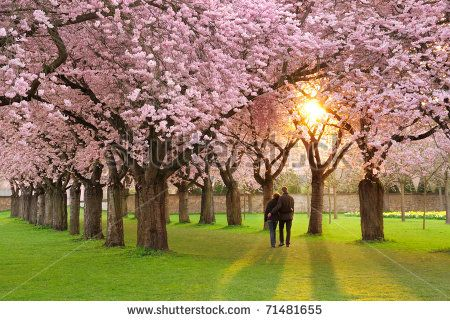 Arvores E Caminhos Fotos, imagens e fotografias Stock   Shutterstock