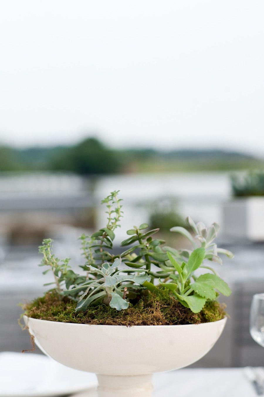 Mini Succulent Garden, Wedding Planning By / Http://bashdc.com,
