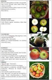 Manzanas variedad