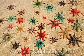 Risultati immagini per sea stars