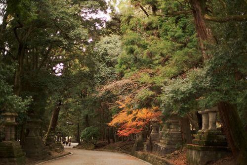 Kasugataishya 春日大社 #2 (by sunnywinds) #japan #nara #nature