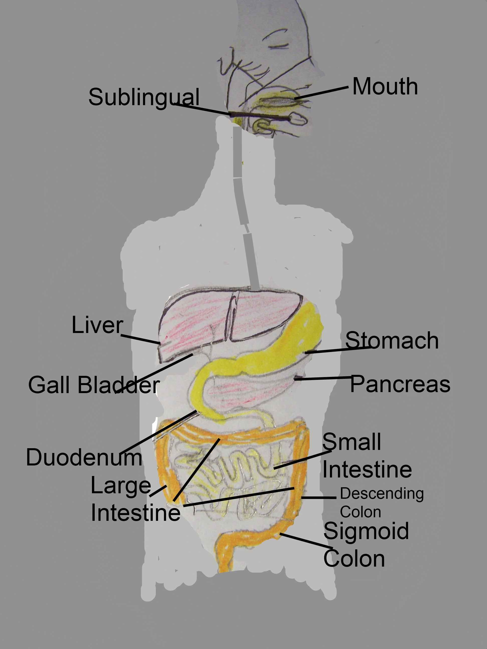 Ionized Water, Digestion & a Good, Healthy Colon