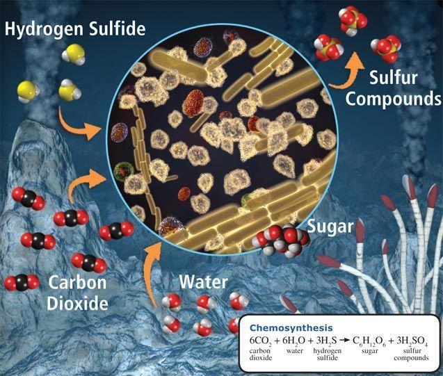 Cougar Energy Drink >> Energy In Organisms Is Called - Energy Etfs