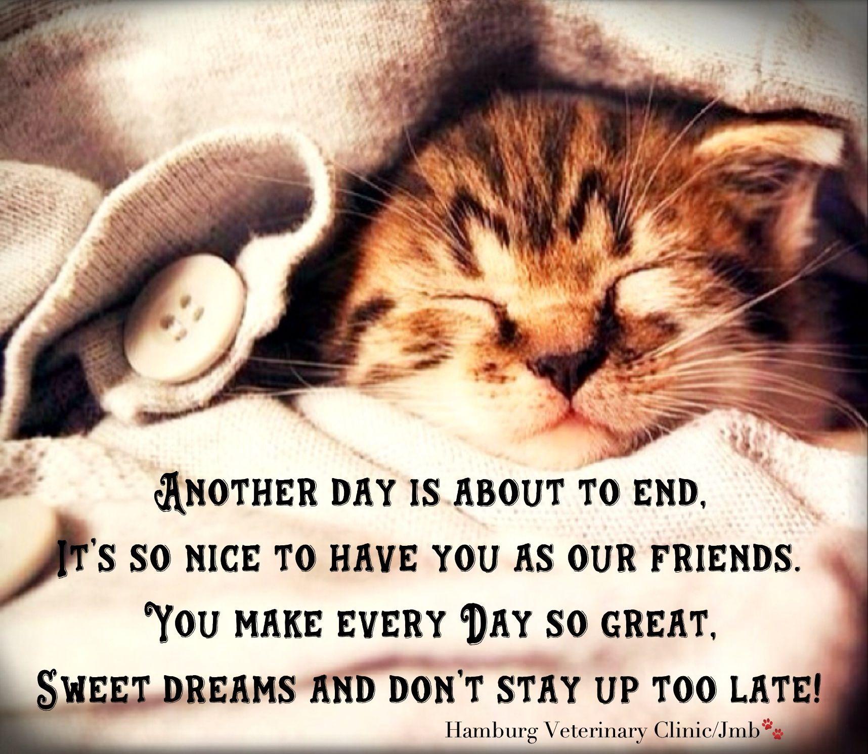 Cute Kitten Good Night Sleep Tight Wishing You The Sweetest Of Dreams Kittens Cutest Cute Animals Animals