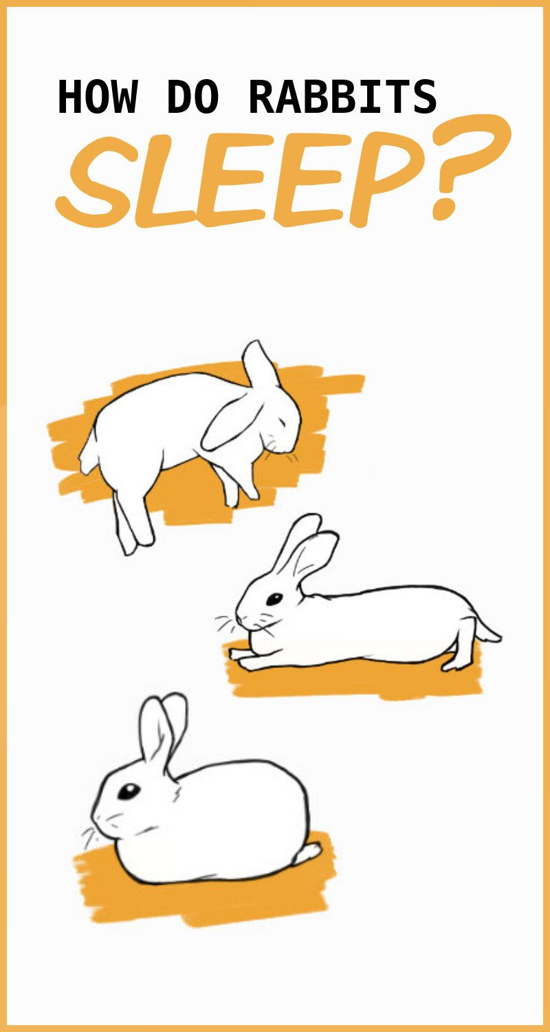 Sleep Habits Of Pet Rabbits In 2020 Pet Rabbit Pet Rabbit Care Pocket Pet
