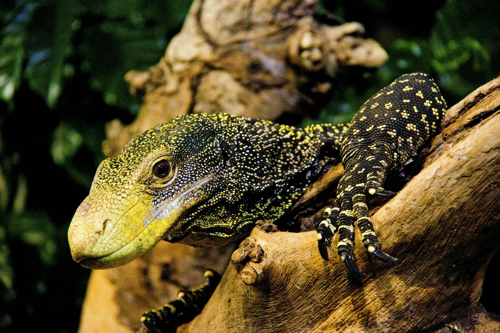 7 Of The World S Most Dangerous Lizards And Turtles