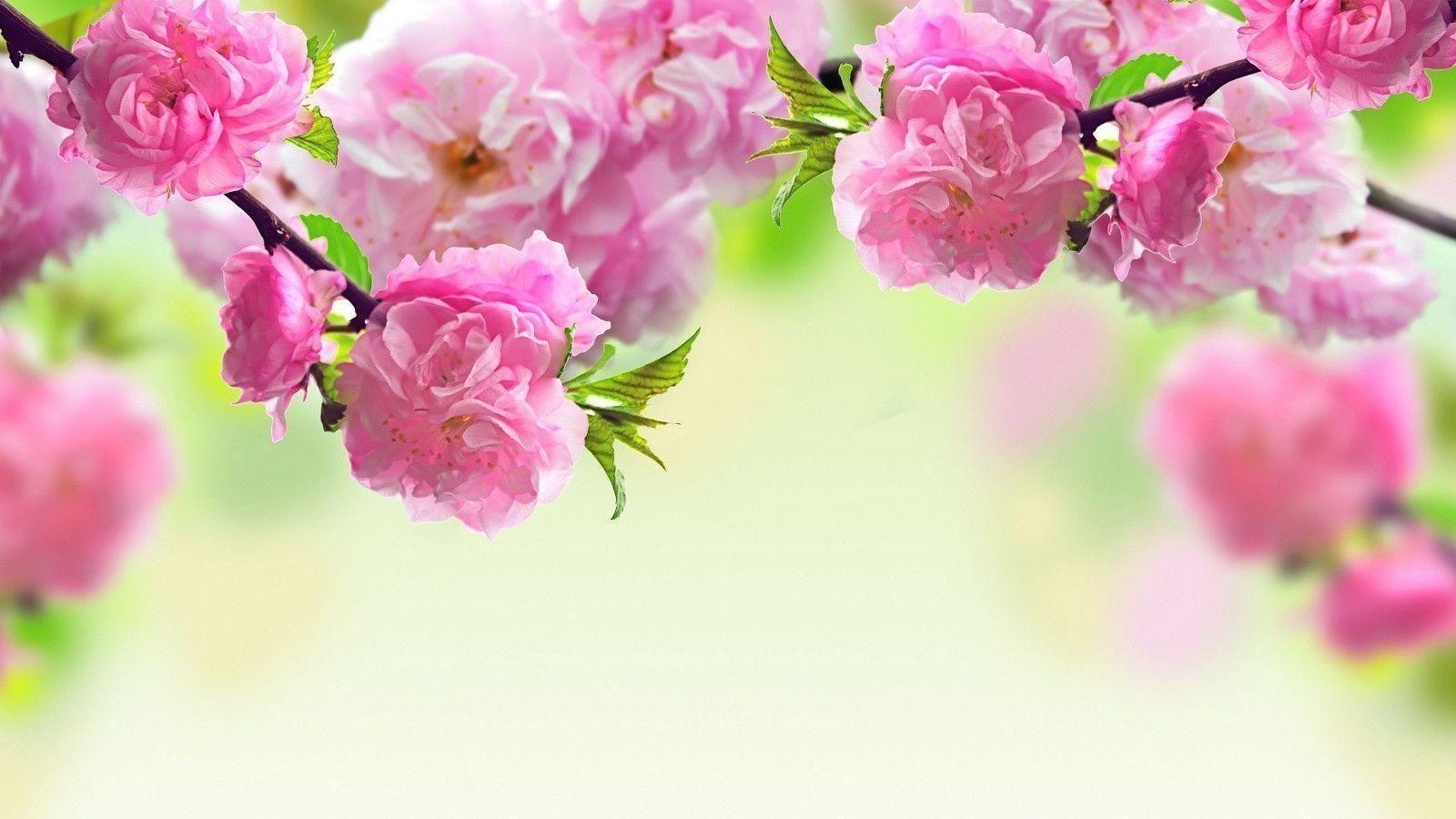10 New Spring Flowers Background Desktop Full Hd 1920 1080 For Pc Desktop Spring Flowers Wallpaper Spring Desktop Wallpaper Spring Flowers Background