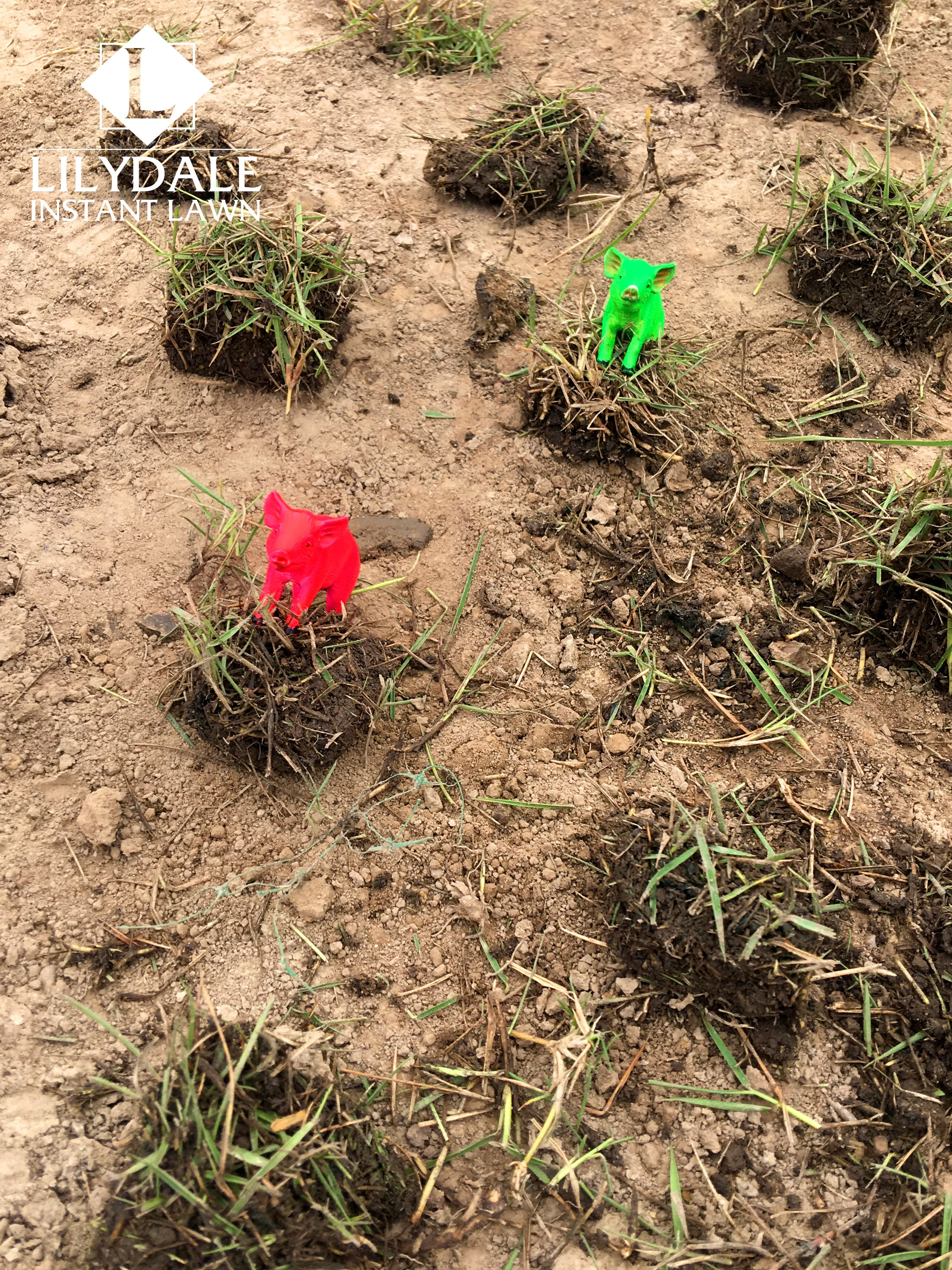 Lily & Dale have been spotted at our Yarra Glen Farm planting the ...