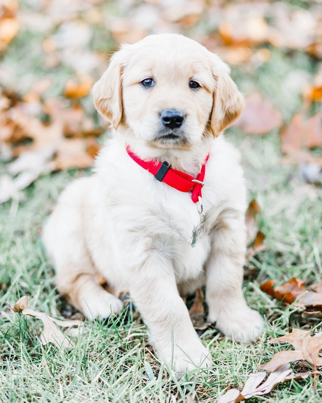 30 Best Dog Names For Gorgeous Golden Retrievers Pictures Dogtime In 2020 Dog Names Cute Names For Dogs Boy Dog Names