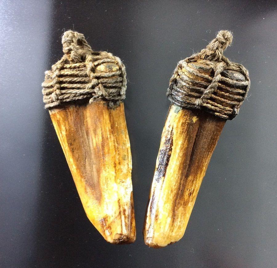 Takrut Tiger Talisman Real 2 Pig Teeth Thai Amulet LP Pern Power Fang Pendant