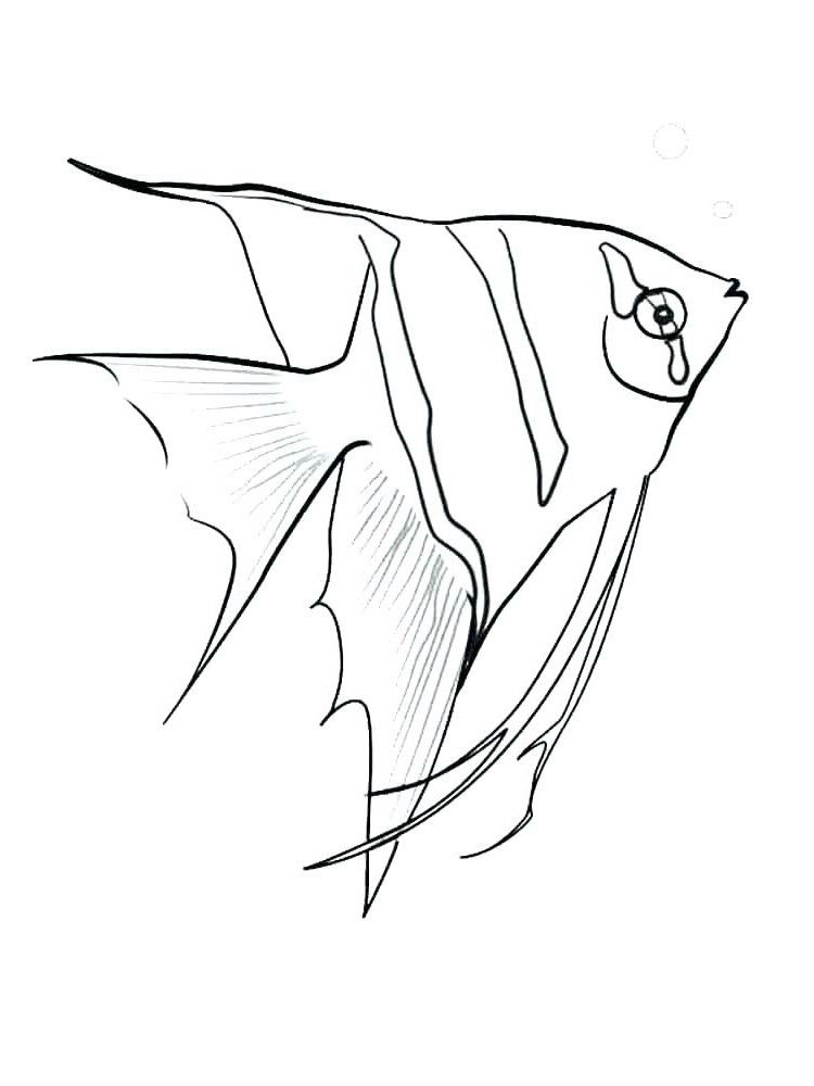Angel Fish Coloring Page Youngandtae Com Fish Coloring Page Angel Coloring Pages Animal Coloring Pages
