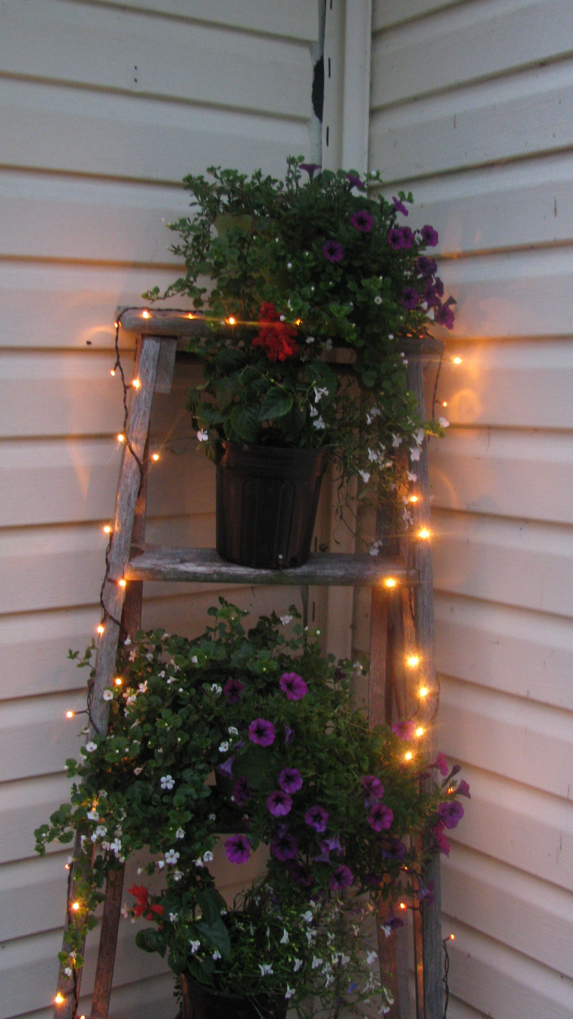 Rustic ladder and fairy lights mkutim chatham house pinterest