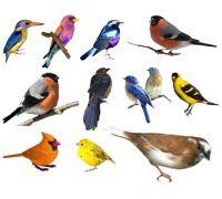 Lenagold - Клипарт - Птицы 5 | Птицы, Птички, Иллюстрации