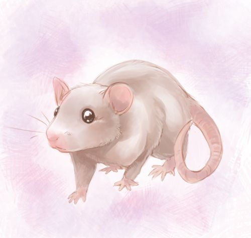 Speedpaint: Little Rat by Zilleniose on deviantART