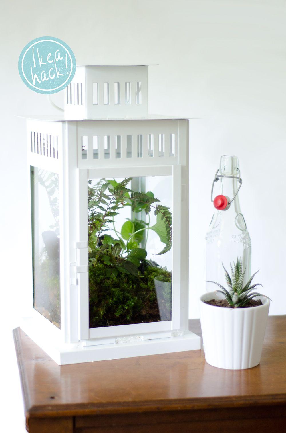 Ikea Hack: #DIY Lantern Terrarium on Thou Swell http://thouswell.co/