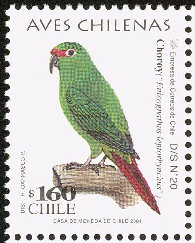 Slender-billed Parakeet stamps - mainly images - gallery format
