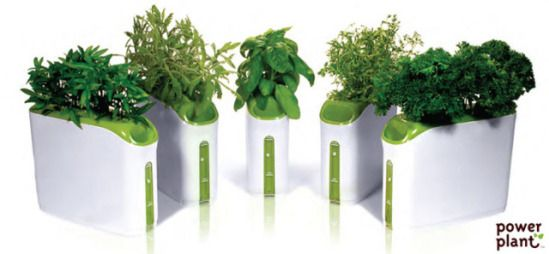 Growing Herbs Indoors In Proveras Mini Power Plant Gardens