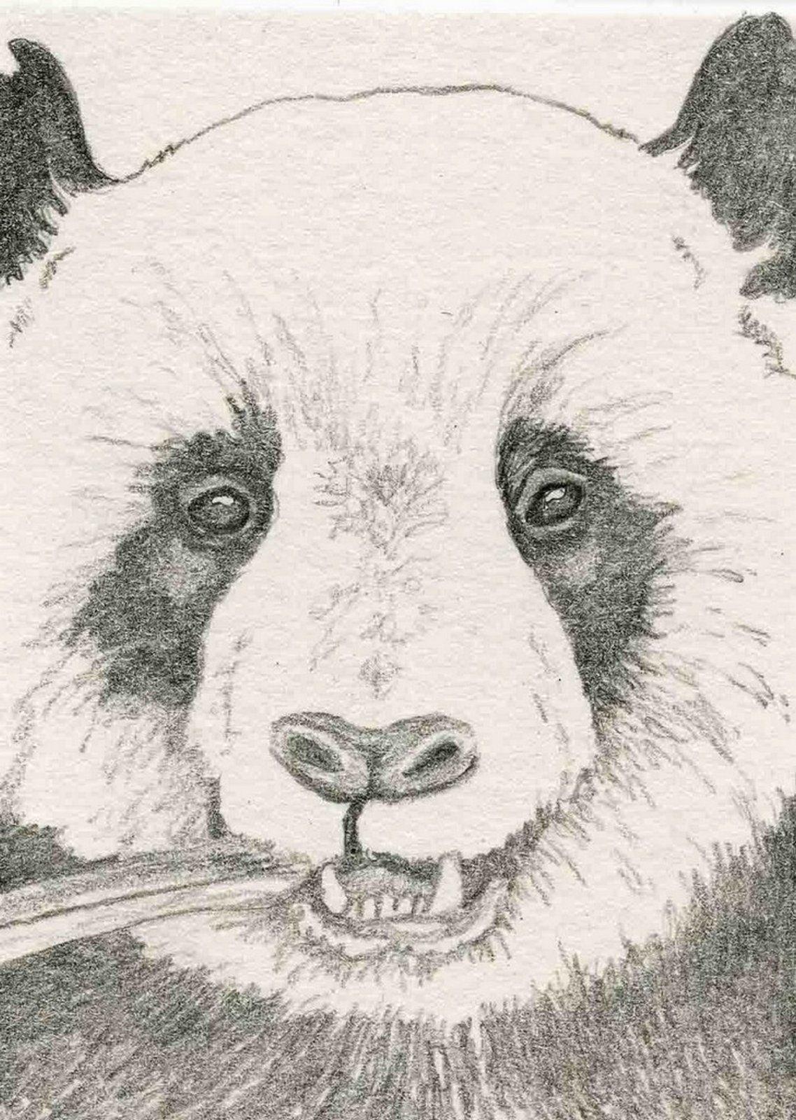 Pin Van Amber Buyle Op Dieren Tekenen Schilderen Dieren Tekenen Panda Tekening Tekenen