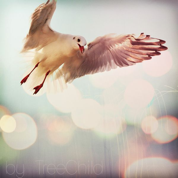 Foto Beat of wings  ( 21x21cm)  von Fotos&Illustrationen by TreeChild auf DaWanda.com