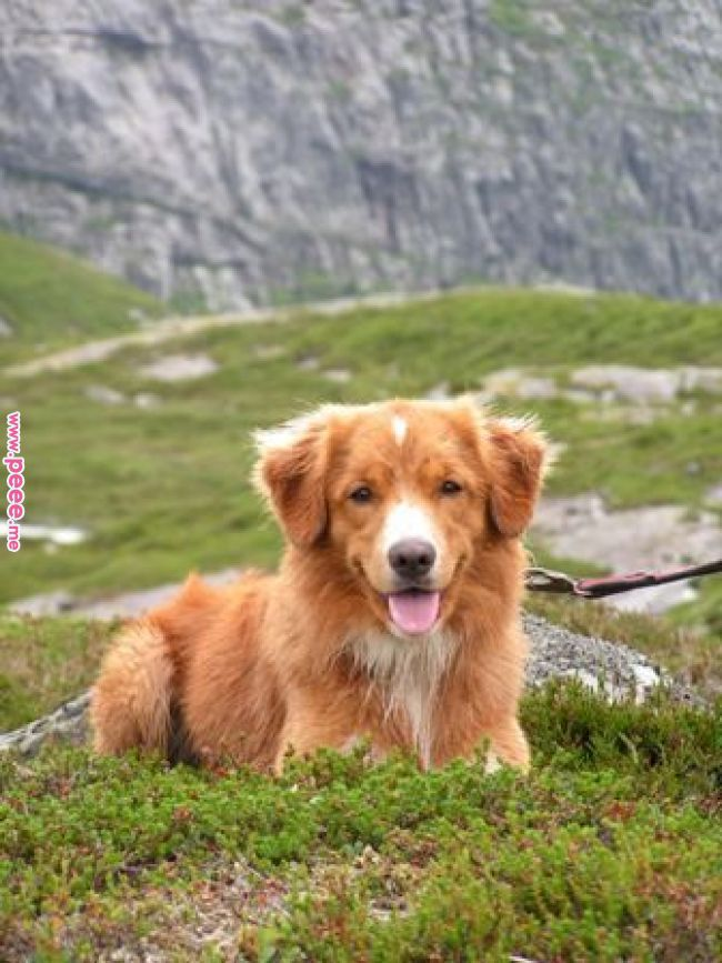 Dogs Breeds Simple Solutions About Dogs That Are Easy To Follow